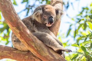AUSTRALIA iNOWA ZELANDIA 2018