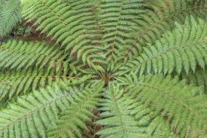 Rośliny Antypodów